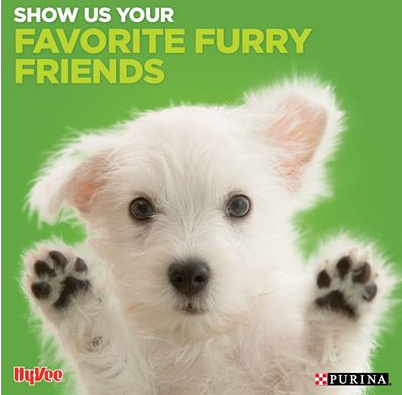 Totally engaging puppy photo courtesy of Hy-Vee's Facebook page.